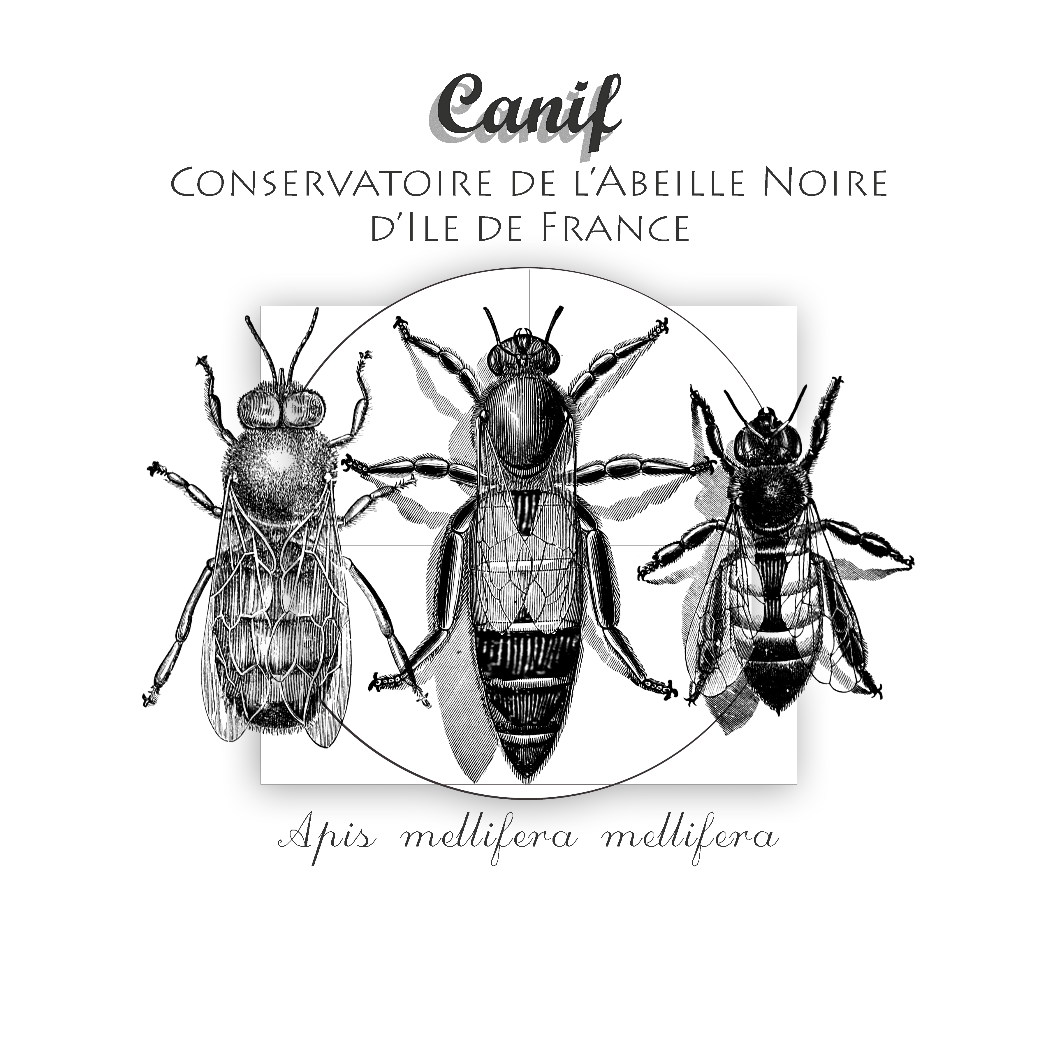 logo Conservatoire de l'abeille noire d'Île-de-France