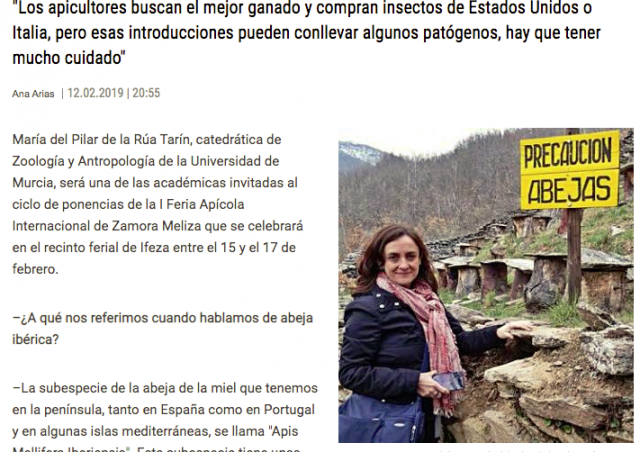 "Maria del Pilar de la Rúa: ""The Iberian honey bee is more productive than the foreign one"""