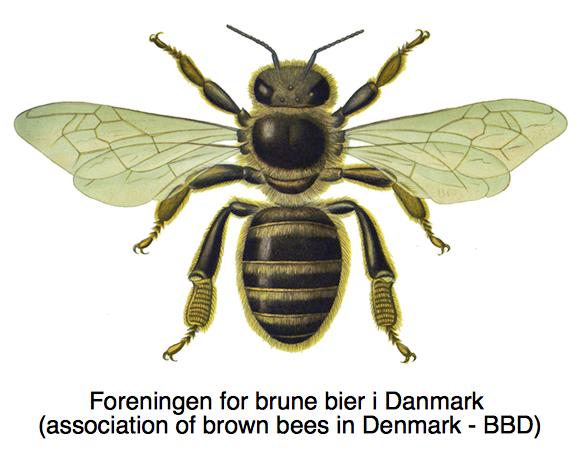 Foreningen for brune bier i Danmark